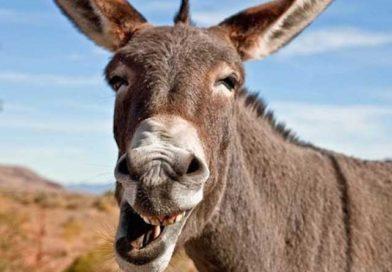 গাধার সঙ্গে মিলনের খেসারত, 'র্যাবিস' রোগের শিকার ১৫ কিশোর