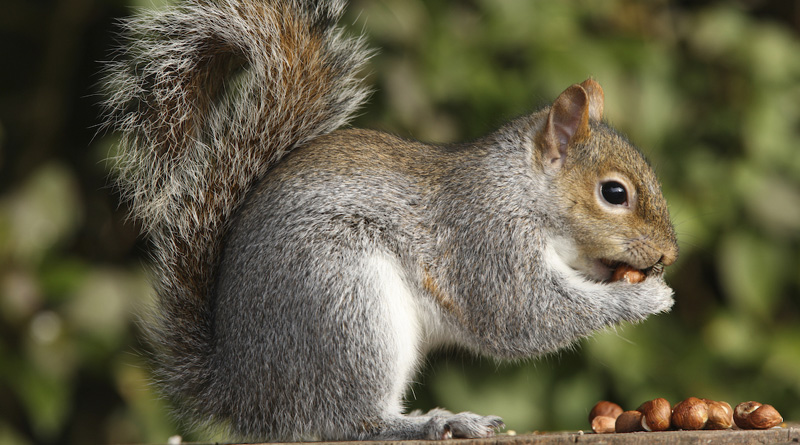 Squirrel starts fire, spoiling 82,000 litres of milk in Burnaby