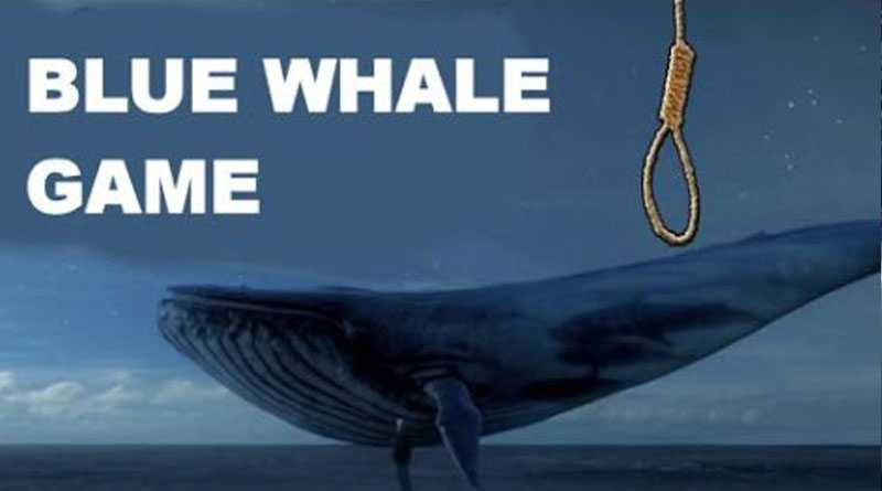 Calcutta HC seeks report from Centre on Blue Whale