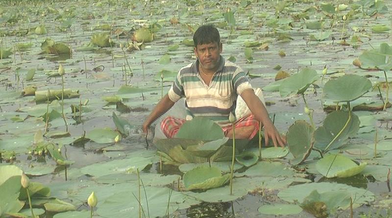 Scarce Lotus supply haunts Durga Puja organizers