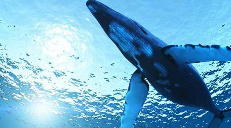 blue-whale-hooghly-student-escapes-sure-death