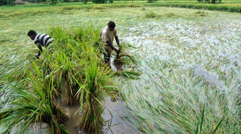 West Bengal govt announces aid for rain hit farmers