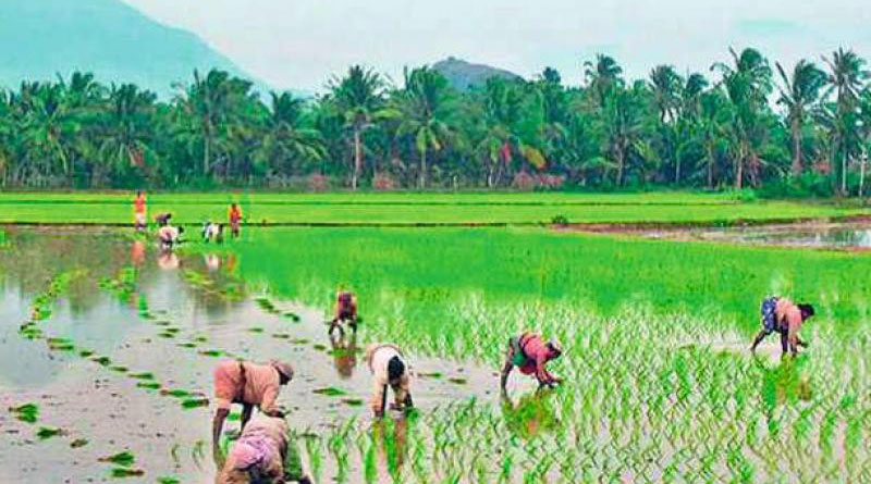 Here is how farmers can get benefit of central and state schemes | Sangbad Pratidin