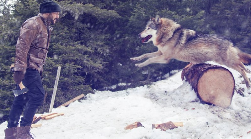 Salman Khan Takes On Wolves In Tiger Zinda Hai