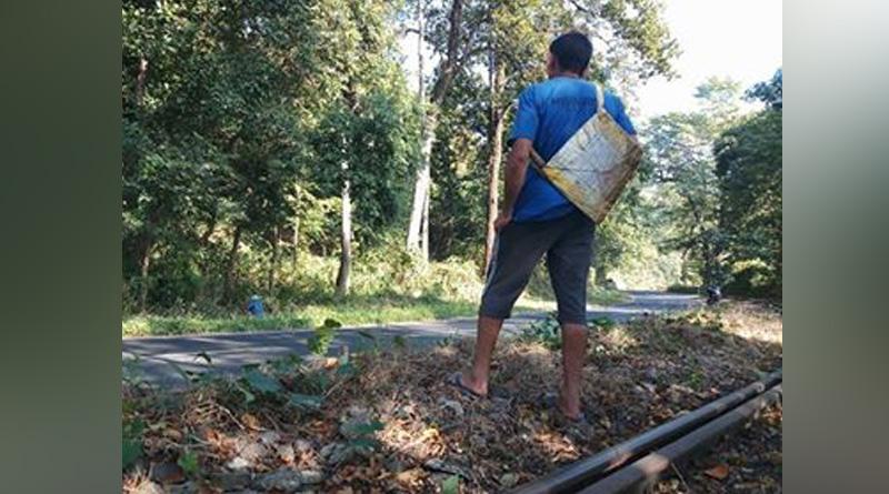 রংটংয়ের জঙ্গলে বাঘের গর্জন! আতঙ্কে স্থানীয় বাসিন্দারা