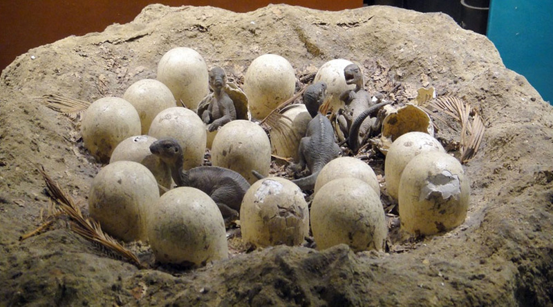 Dinosaur eggs from Jurassic era discovered in China
