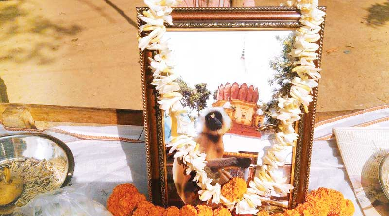 Three thousand people attended fenural ceremony of a Monkey at Baduria