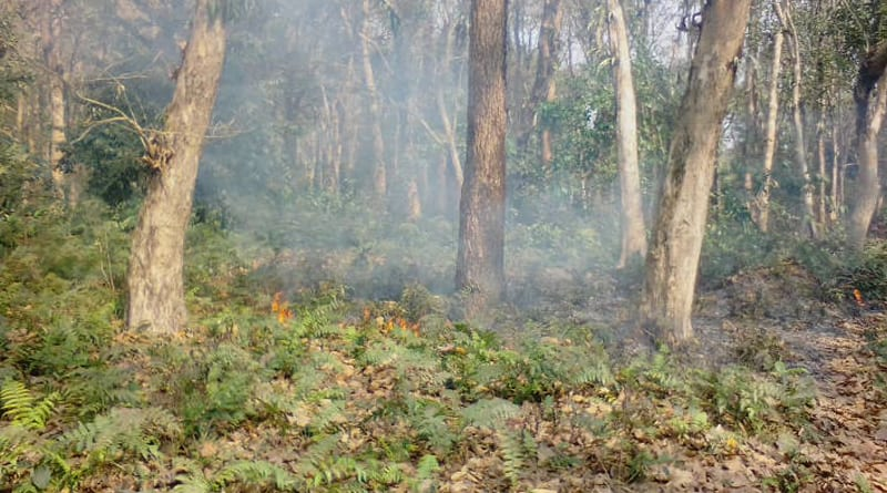 Poachers behind the continuous fire in the forest of Ayodhya | Sangbad Pratidin