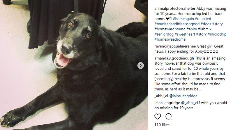 Washington: beloved pet back after ten years