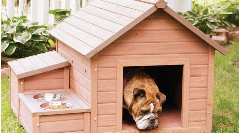 Now Kolkata pet dogs get own Holiday Home