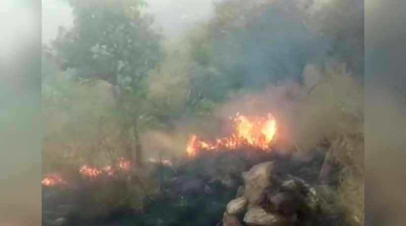 Wildfire in Tamil Nadu jungle kills 5 students