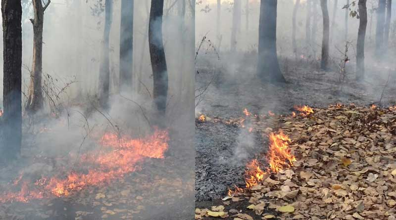 Again massive fire breaks out in the forest at North bengal