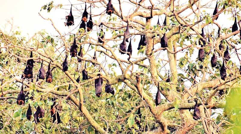 Control room in Malda as Nipah virus sparks panic in Bengal