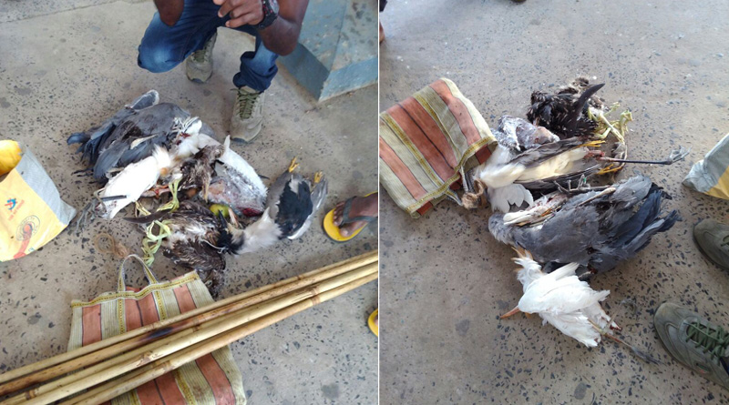 Dead birds and bats rescued from Katwa