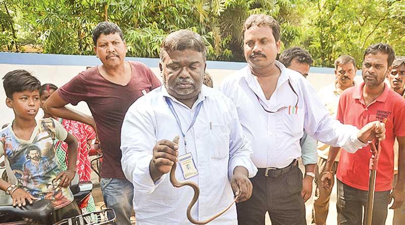 Suri: Snake bites man, he takes it to hospital