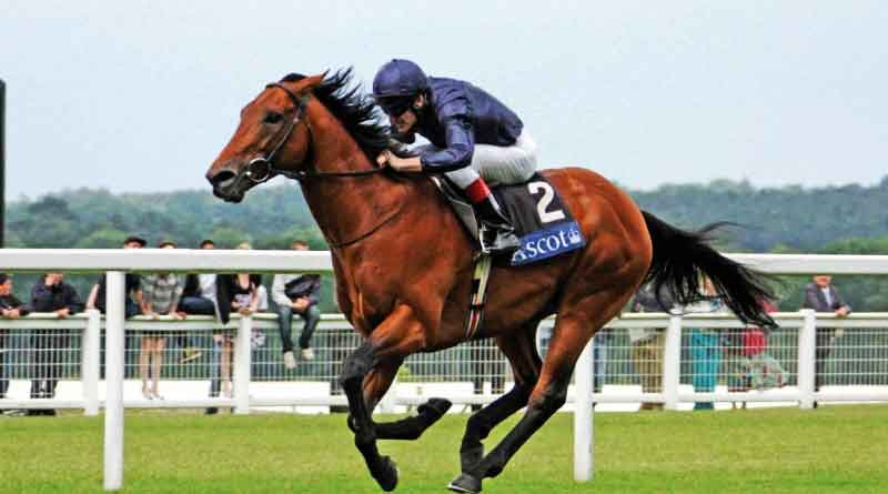 Kolkata: Race Course horses allegedly give steroid for win