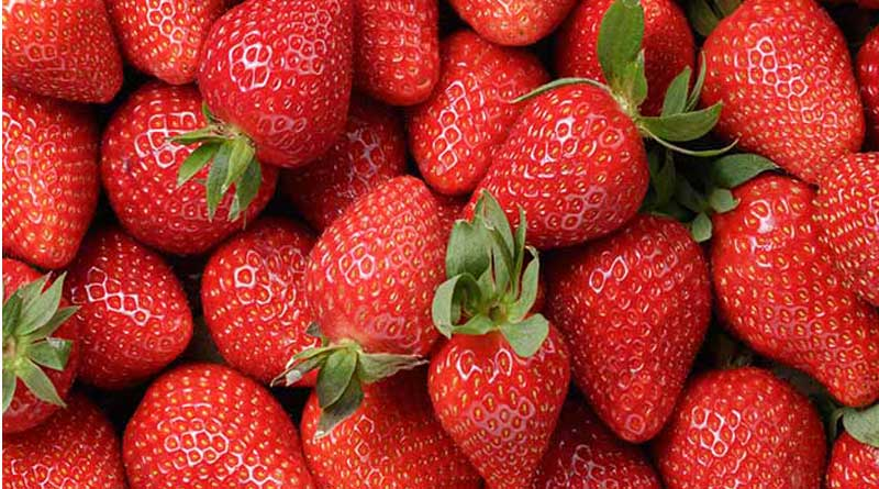 Japanese representatives impressed over organic farming of strawberry