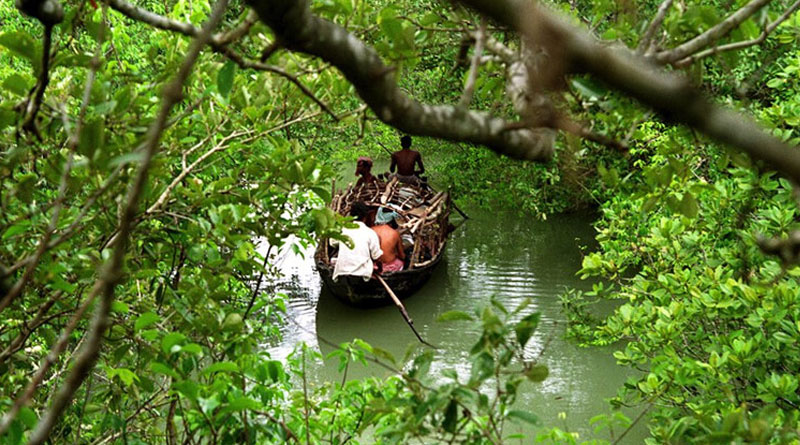 Sunderbans among world's top 30 mangrove forests: UNESCO