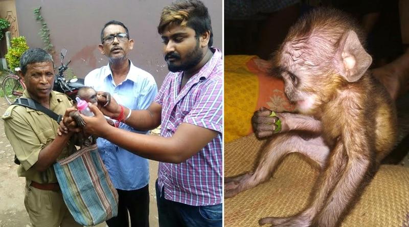 Man rescues baby monkey in Uluberia
