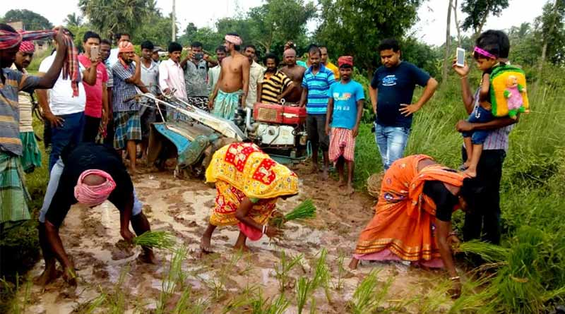 Pothole menace: Tarakeshwar residents plant paddy on road