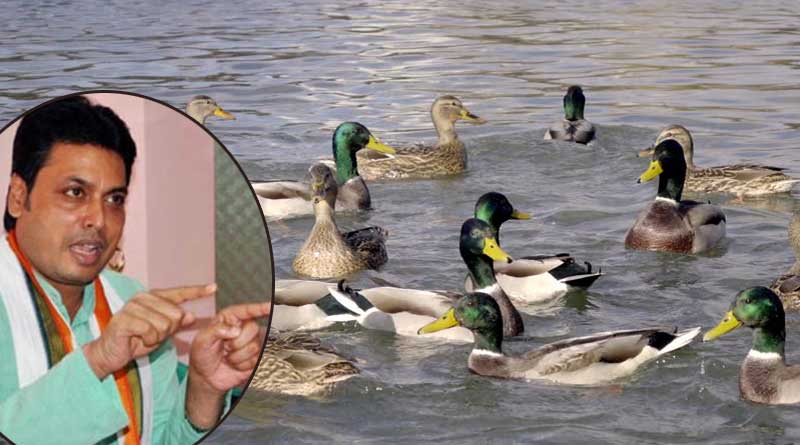 Ducks swim to generate oxygen: Tripura CM