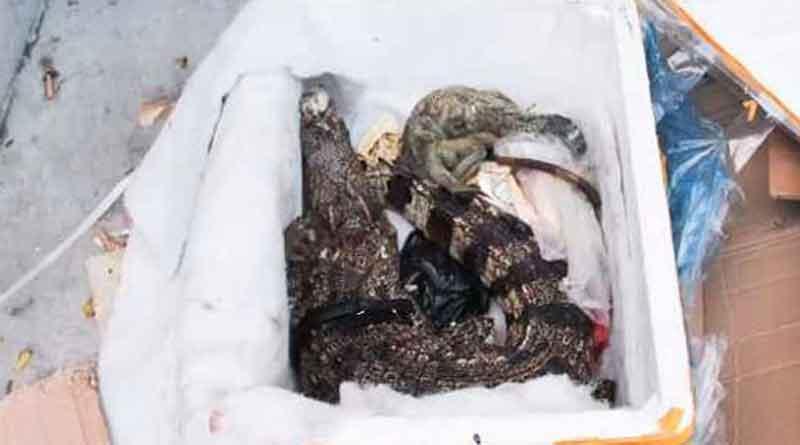 China: Woman finds dead crocodile inside parcel