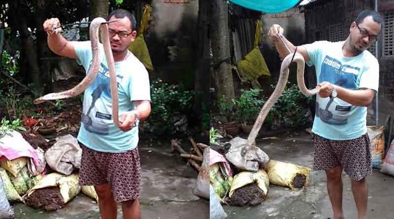 Snake wrangler rescues deadly Cobra in Katwa