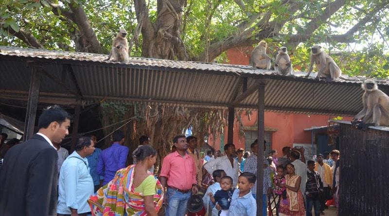 Katwa Court premises captured by monkeys