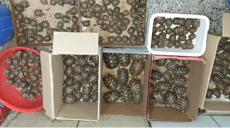 Tortoise recovered in Mumbai