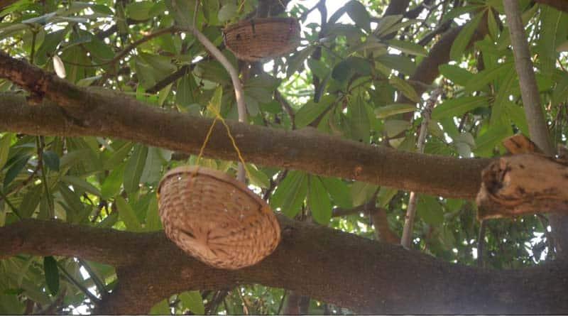 Katwa school haven for birds