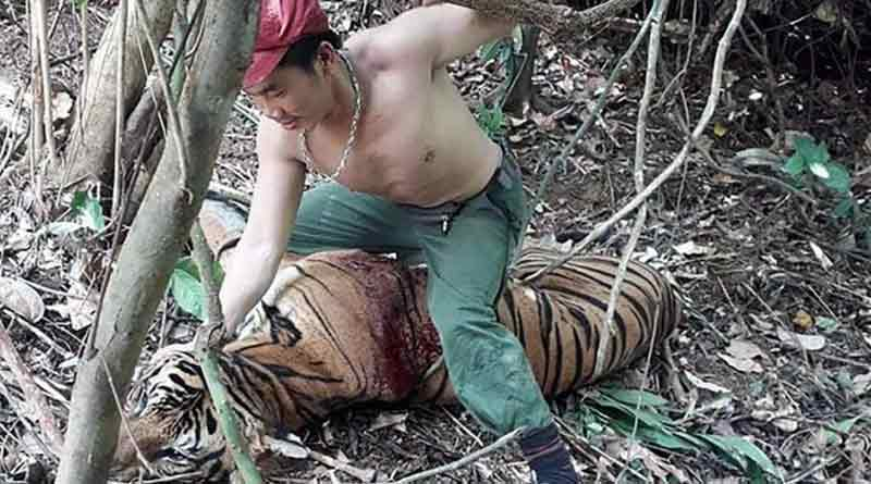 Tiger poachers arrested by Thai police
