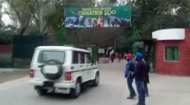 Man killed by lions in zoo