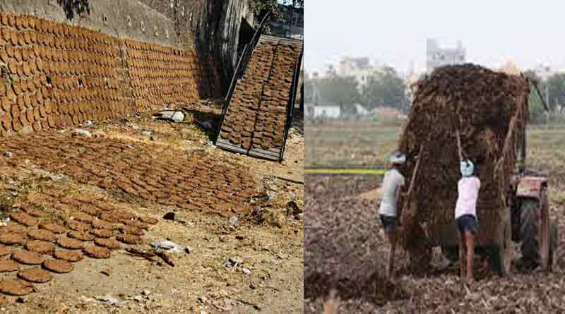 Cowdung of worth Rs.1lakh has been stolen