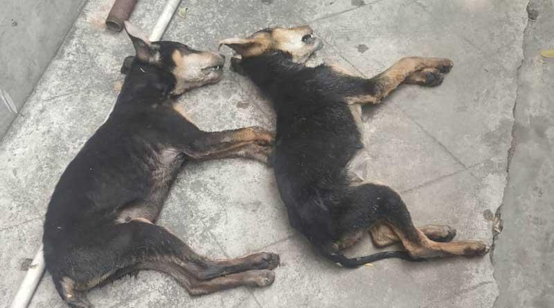 Dog Killing Asansol