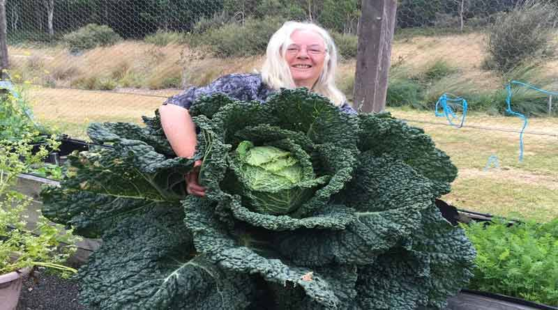 Rosemary Norwood with Giant Cabbage