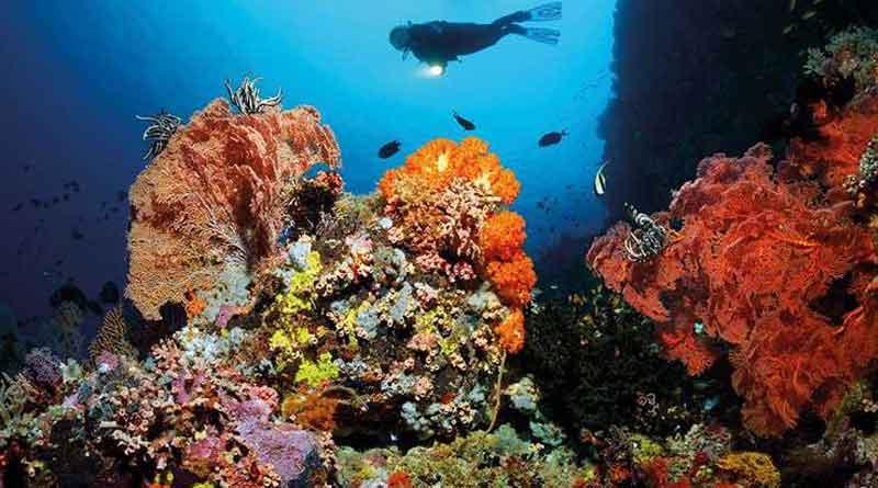 Corals in Great Barrier Reef is in great danger as it declines 90%