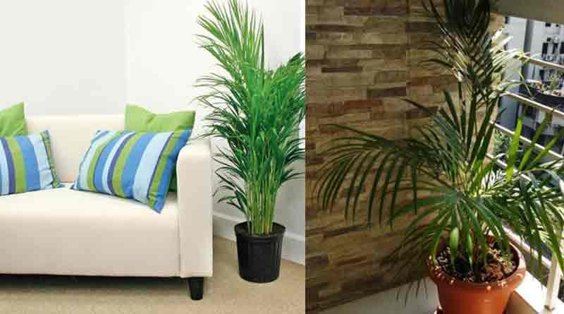 erica palm