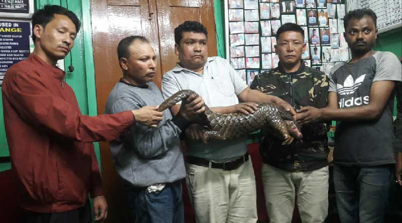 Arrest person with died Pangolin