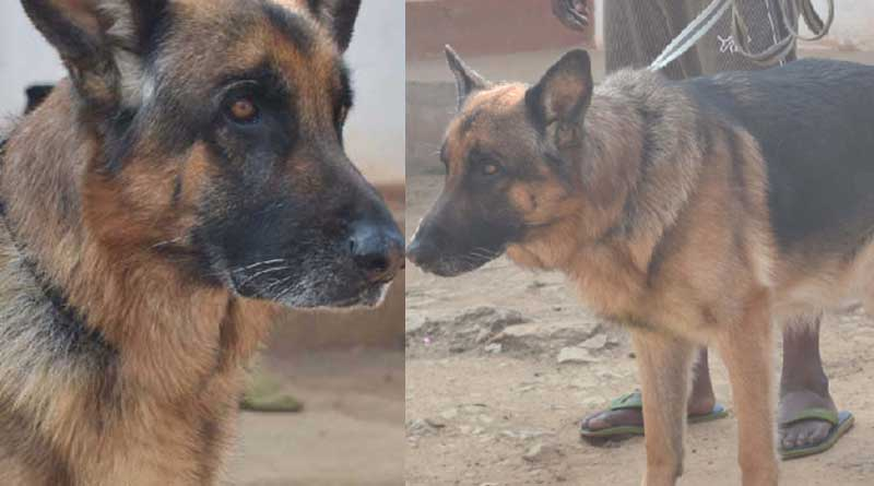 Trained Dog squad will lead Anti maoist operation in Junglemahal