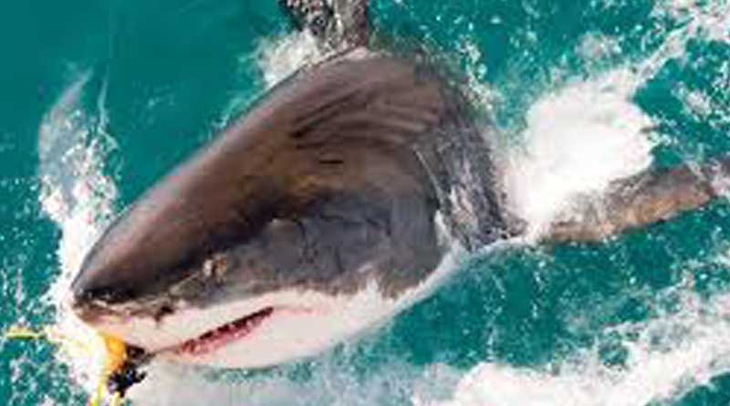 3 sharks killed US woman,travelling to Bahama in vacation