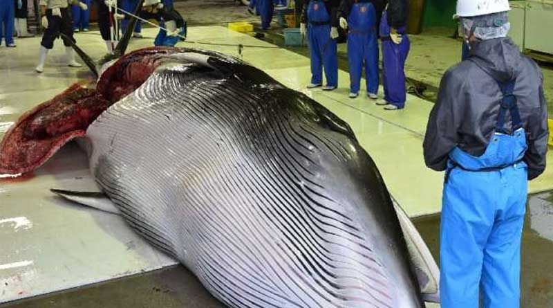 biggest-whale