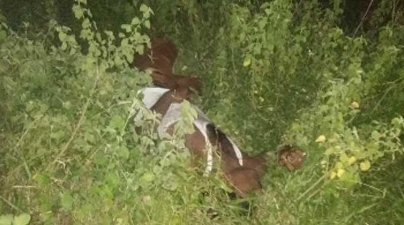 TMC worker deadbody recovered in a bush near Arambag-Goghat rail line