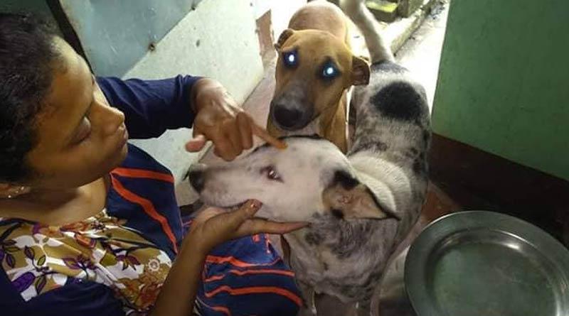 Kolkata animal rescue center organizes 'Bhai Phota' for canines