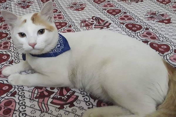 midnapur-cat-missing1