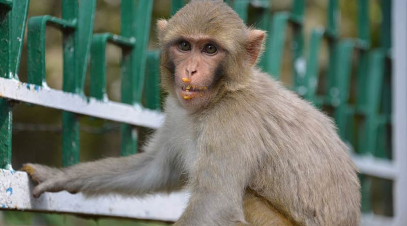 Telangana: monkey hang to death from tree as other cheer