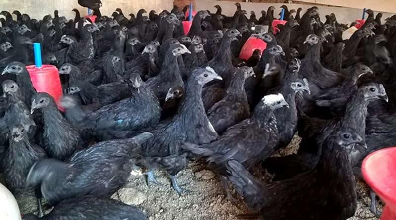 Karaknath-Chicken