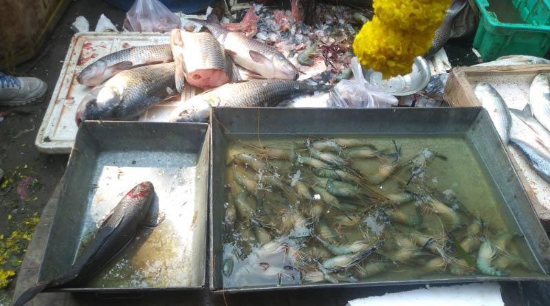 Bandel fish