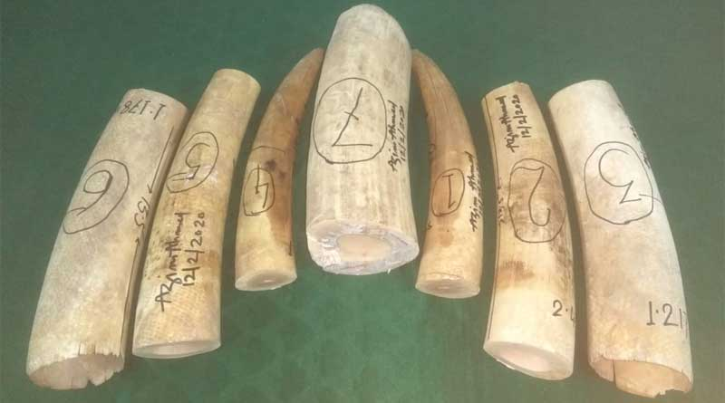 Elephant teeth seized from Gandhidham express at NJP.