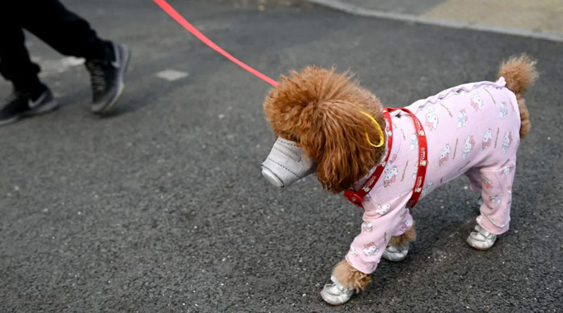 Pet Dog In Hong Kong First Case Of Human To Animal Corona Transmission
