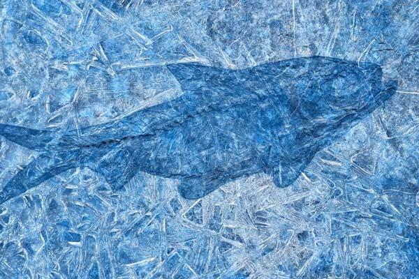 Frozen-Fossil